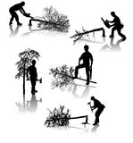 Trabajadores de la silvicultura Imagen de archivo