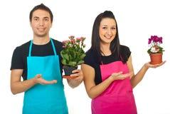 Trabajadores de los floristas que muestran a sus plantas Imágenes de archivo libres de regalías