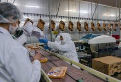 Trabajadores de mujer musulmanes que trabajan en una planta de carne del pollo Fotos de archivo libres de regalías