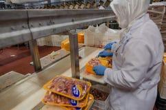 Trabajadores de mujer musulmanes que trabajan en una planta de carne del pollo Foto de archivo