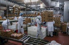 Trabajadores de mujer musulmanes que trabajan en una planta de carne del pollo Imagen de archivo