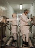 Trabajadores de mujer musulmanes que trabajan en una planta de carne del pollo Imágenes de archivo libres de regalías