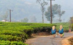 trabajadores de mujeres en el jardín de té Imágenes de archivo libres de regalías
