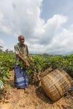 Trabajadores del hombre del Tamil Imagen de archivo
