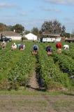 Trabajadores del recogedor de la fresa Foto de archivo libre de regalías