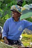 Trabajadores en arroz de la cosecha Fotos de archivo