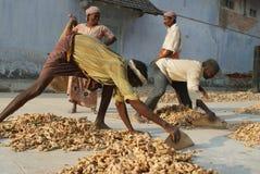 Trabajadores en el mercado de la especia en Cochin, Kerala, Ind foto de archivo