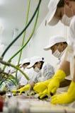 Trabajadores en una planta imagenes de archivo