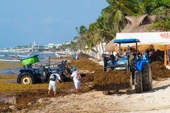 Trabajadores locales que limpian la playa de la alga marina en el Playa del Carmen imagen de archivo