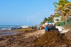 Trabajadores locales que limpian la playa de la alga marina en el Playa del Carmen fotos de archivo libres de regalías