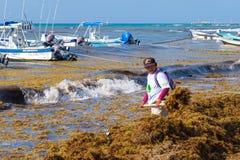 Trabajadores locales que limpian la playa de la alga marina en el Playa del Carmen fotografía de archivo libre de regalías