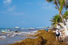 Trabajadores locales que limpian la playa de la alga marina en el Playa del Carmen imagen de archivo libre de regalías