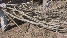 Trabajadores que cortan ramas metrajes