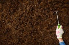 Trabajando en el jardín, plantando una planta Opinión superior del suelo Fotografía de archivo