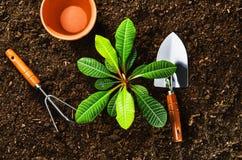 Trabajando en el jardín, plantando una planta Opinión superior del suelo Imágenes de archivo libres de regalías