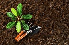 Trabajando en el jardín, plantando una planta Opinión superior del suelo Fotografía de archivo libre de regalías