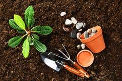Trabajando en el jardín, plantando una planta Opinión superior del suelo Foto de archivo