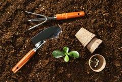 Trabajando en el jardín, plantando una planta Opinión superior del suelo Imagen de archivo