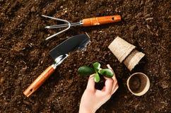 Trabajando en el jardín, plantando una planta Opinión superior del suelo Fotos de archivo