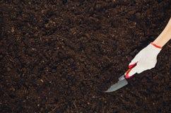 Trabajando en el jardín, plantando una planta Opinión superior del suelo Imagen de archivo libre de regalías