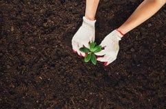 Trabajando en el jardín, plantando una planta Opinión superior del suelo Fotos de archivo libres de regalías