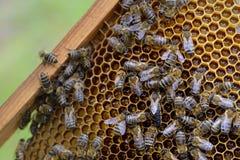 Trabajando rodea a la reina de abejas abejas en una célula de la miel Foto de archivo