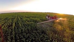 Trabaje a máquina el riego del campo de maíz - visión aérea almacen de video