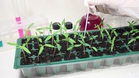Trabajo con las plantas en el laboratorio almacen de metraje de vídeo
