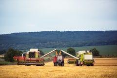 Trabajo cosechando la cosechadora en el campo de trigo Imágenes de archivo libres de regalías