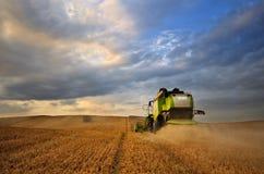 Trabajo cosechando la cosechadora en el campo del trigo Fotografía de archivo