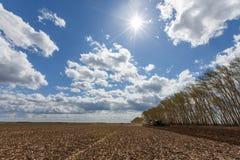 Trabajo cosechando la cosechadora en el campo del trigo fotos de archivo