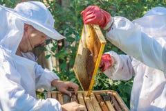 Trabajo de dos apicultores en el colmenar Fotos de archivo