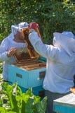 Trabajo de dos apicultores en el colmenar Fotografía de archivo