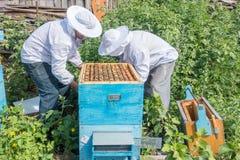 Trabajo de dos apicultores en el colmenar Foto de archivo
