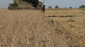 Trabajo de la cosechadora de la máquina segador de la granja en campo de la avena en el verano 4K almacen de video