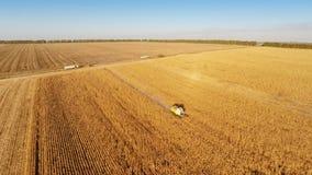Trabajo de la máquina segador sobre campo de maíz almacen de metraje de vídeo