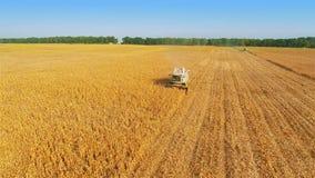 Trabajo de la máquina segador sobre campo de maíz metrajes