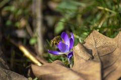 Trabajo de la primavera foto de archivo libre de regalías