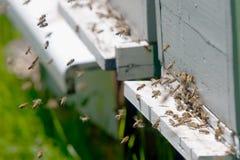 Trabajo de las abejas Fotos de archivo