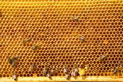 Trabajo de las abejas sobre el panal Imagen de archivo