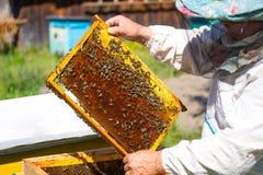 Trabajo de las abejas sobre el panal Fotos de archivo