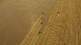 Trabajo de las cosechadoras de la cosecha del trigo en el campo metrajes