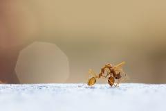 Trabajo de las hormigas del poder Imagen de archivo
