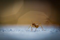 Trabajo de las hormigas del poder Foto de archivo libre de regalías