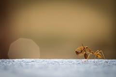 Trabajo de las hormigas del poder Fotografía de archivo libre de regalías