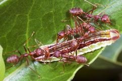Trabajo de las personas de las hormigas Fotos de archivo libres de regalías