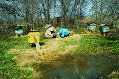 Trabajo de tres apicultores sobre un colmenar en la colmena Día asoleado Foto de archivo libre de regalías