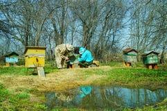 Trabajo de tres apicultores sobre un colmenar en la colmena Día asoleado Imagenes de archivo