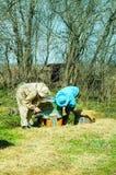 Trabajo de tres apicultores sobre un colmenar en la colmena Día asoleado Fotografía de archivo