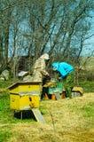 Trabajo de tres apicultores sobre un colmenar en la colmena Día asoleado Fotos de archivo libres de regalías